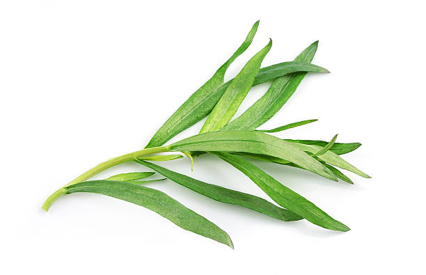 tarragon herbs on a white background - tarragon stock photos and pictures