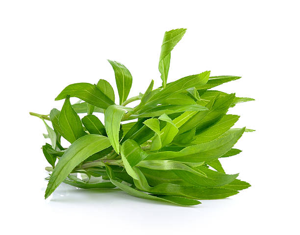 tarragon herbs on white background - tarragon stock photos and pictures