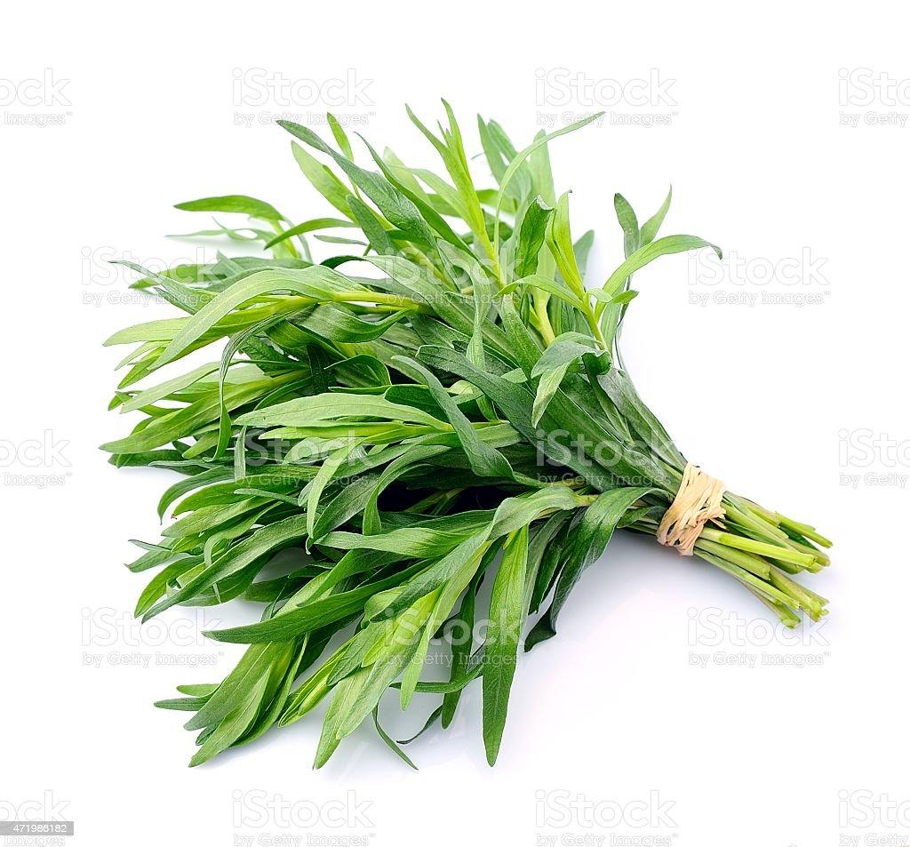 Tarragon herbs stock photo