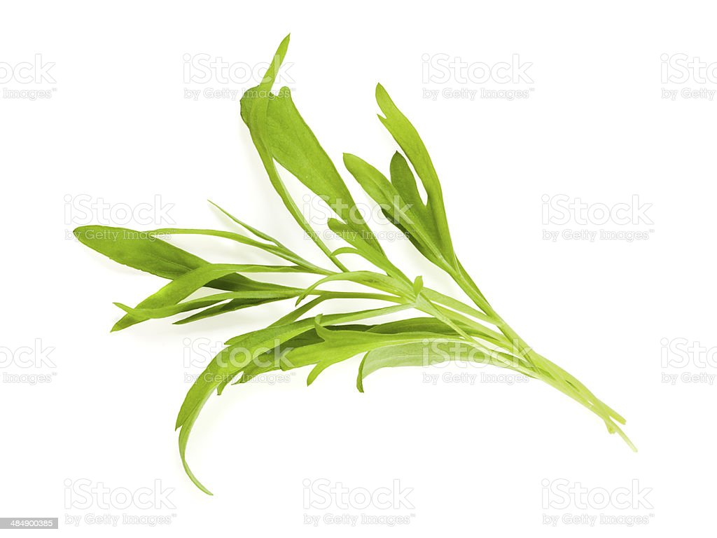 Tarragon leaves isolated stock photo
