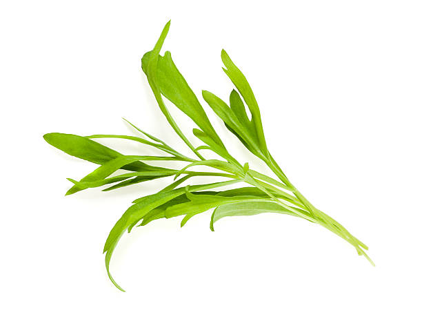 tarragon leaves isolated - tarragon stock photos and pictures