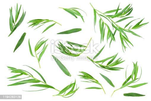 tarragon or estragon isolated on a white background. Artemisia dracunculus.