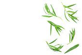 tarragon or estragon isolated on a white background with copy space for your text. Artemisia dracunculus. Top view. Flat lay.