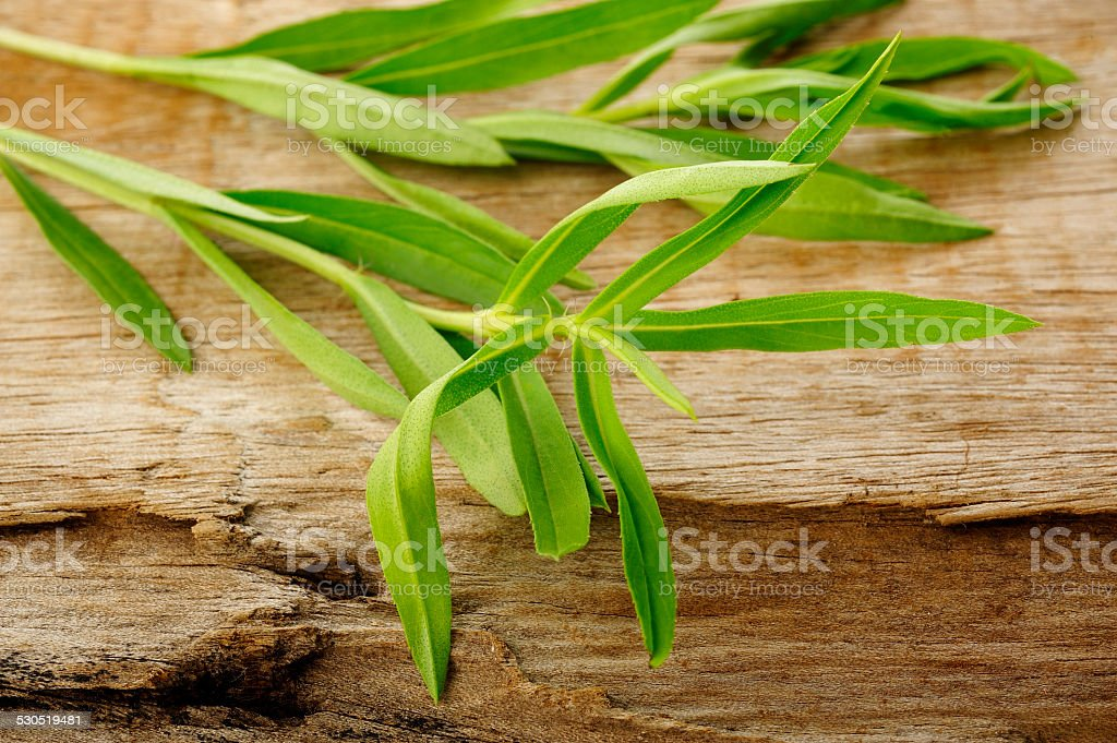 Tarragon twig stock photo