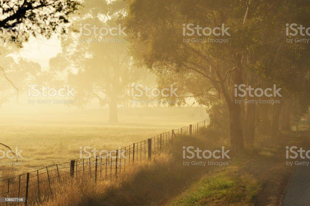 Tasmania landscape with fog royalty-free stock photo