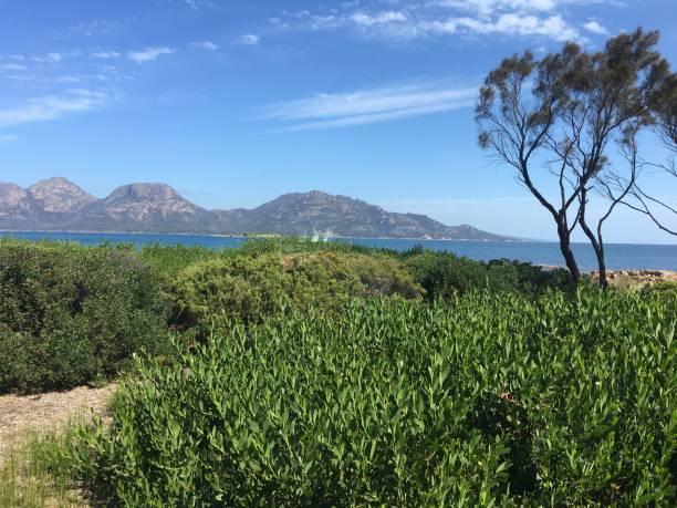 tasmanien - 525d stock-fotos und bilder