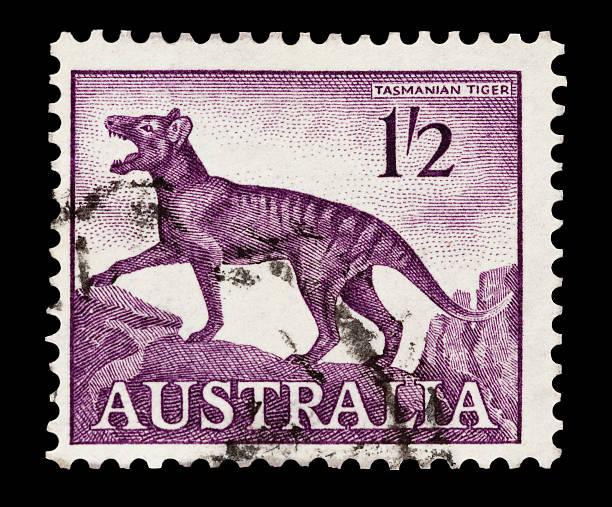 tasmanischer tiger - brüllender tod stock-fotos und bilder