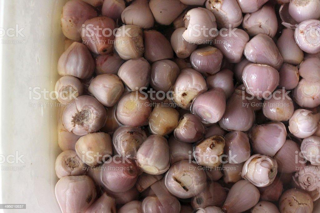 Tassel hyacinths / lampascione royalty-free stock photo