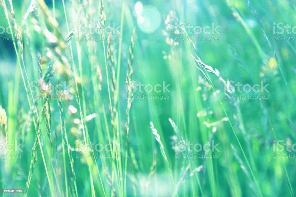 Taste of a summer: immersed in high blades of grass of a may meadow foto de stock royalty-free