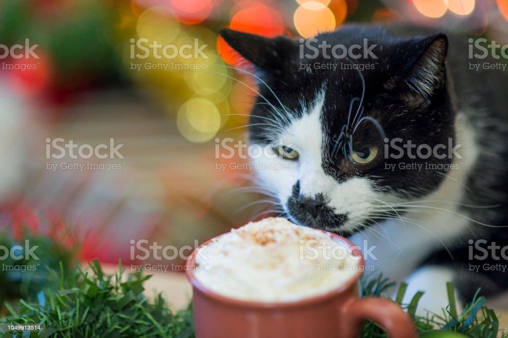 Taste of Holiday Hot Chocolate stock photo