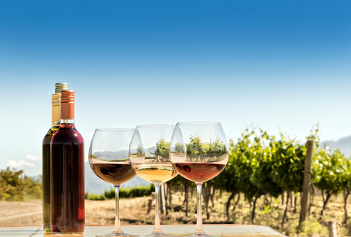 Red, white, and rosé wine, in the vineyard