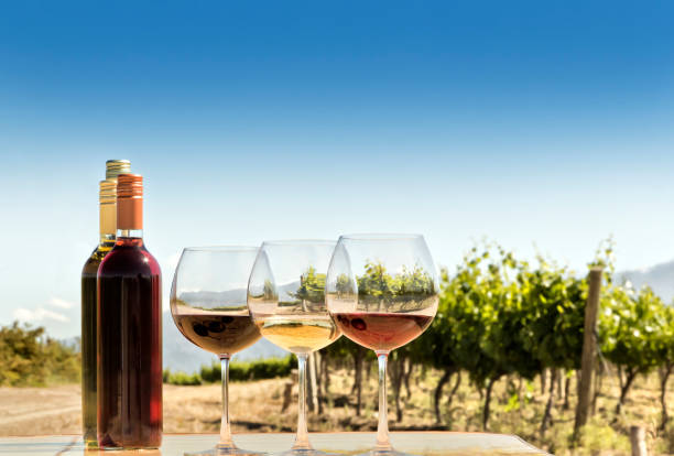Tasting of red, white, and rosé wine, at your terroir stock photo