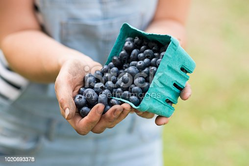 Anonymous young woman's hands holding a container of organic fresh blueberries that she grew on her local farm, and pouring them into her hand.
