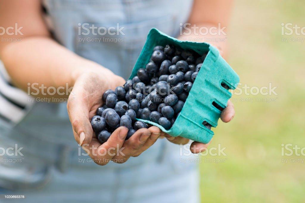 Tasty Blueberries stock photo