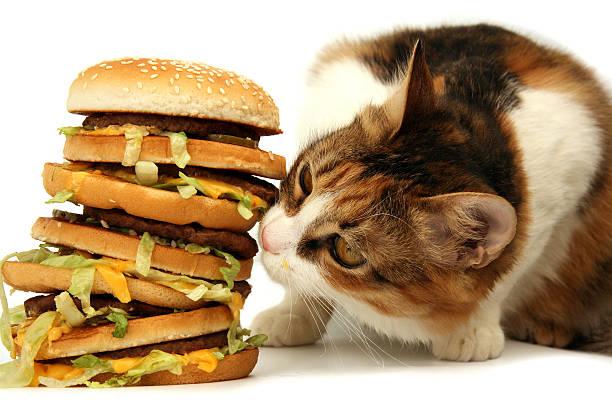 Tasty dinner picture id172275258?b=1&k=6&m=172275258&s=612x612&w=0&h=0amdxlossblrxztrl9e6c0jydaxdblf wm1mkltnaau=