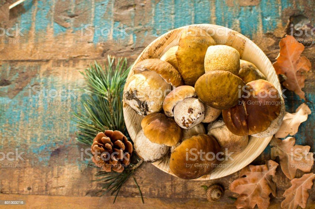Comida sabrosa - fresca Boletus boletus roble muchrooms, alta calidad, listo para cocinar - foto de stock