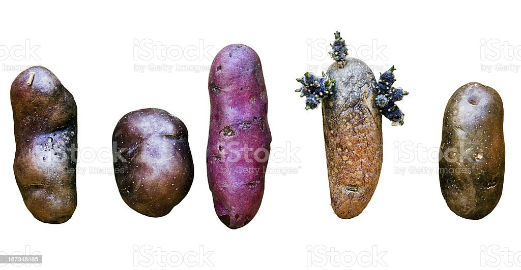 Taters royalty-free stock photo
