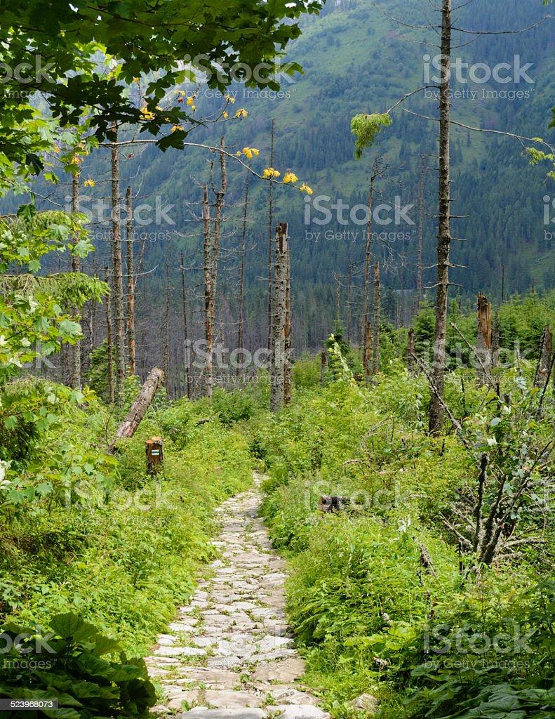Trilha de Tatra - foto de acervo