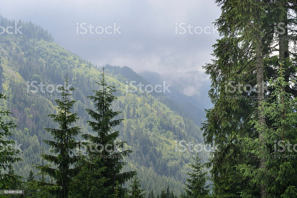 Montanhas Tatra foto royalty-free