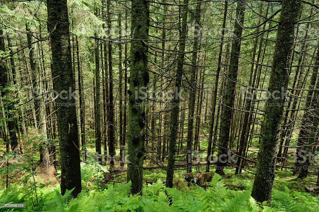 Madeiras de Tatra - foto de acervo