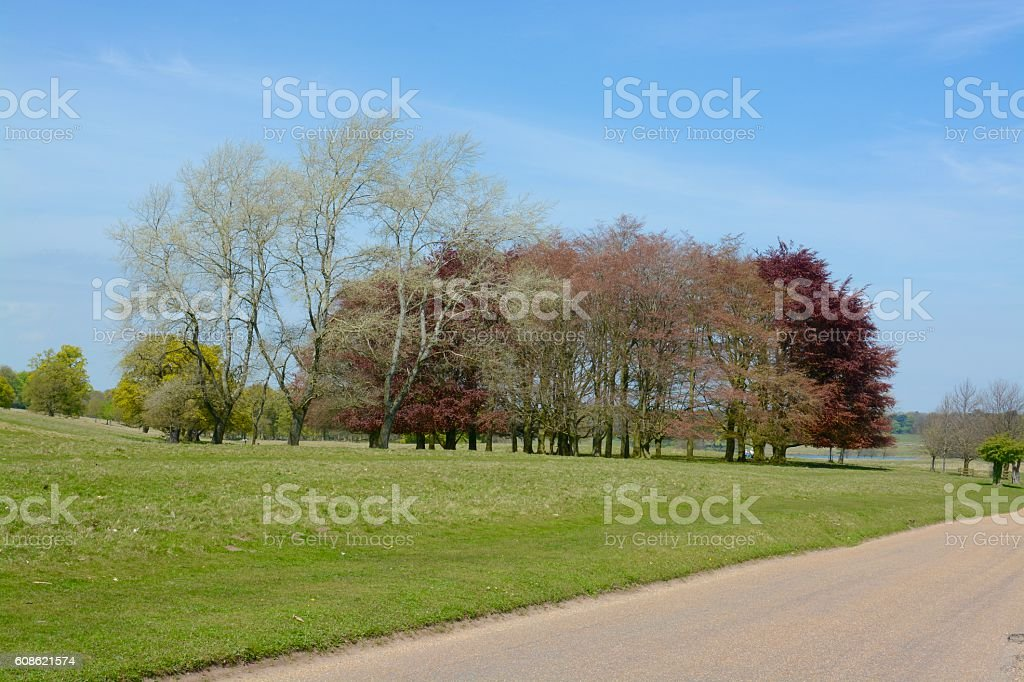 Tatton Park stock photo