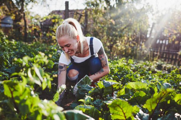tätowierte frau landwirtschaft - gartenarbeit stock-fotos und bilder