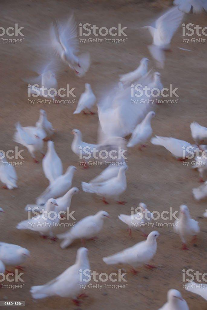 Tauben in der Stadt - Spanien foto de stock royalty-free