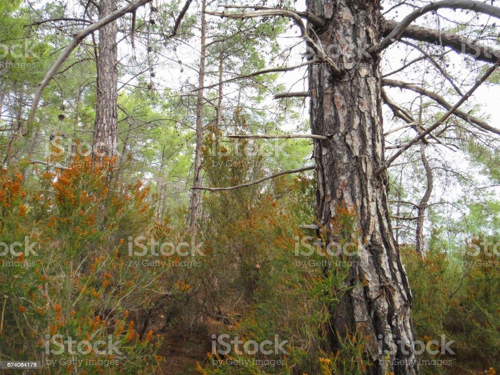 Monts Taurus (Bati Toroslar). La forêt dans les montagnes de la Turquie. Nature de l'Asie mineure photo libre de droits