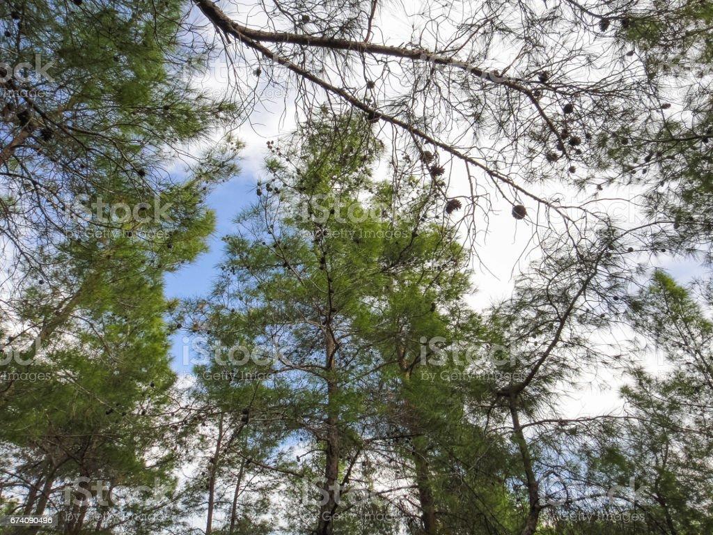 Taurus Mountains (Bati Toroslar). Forest in the mountains of Turkey. Nature of Asia Minor royalty-free stock photo