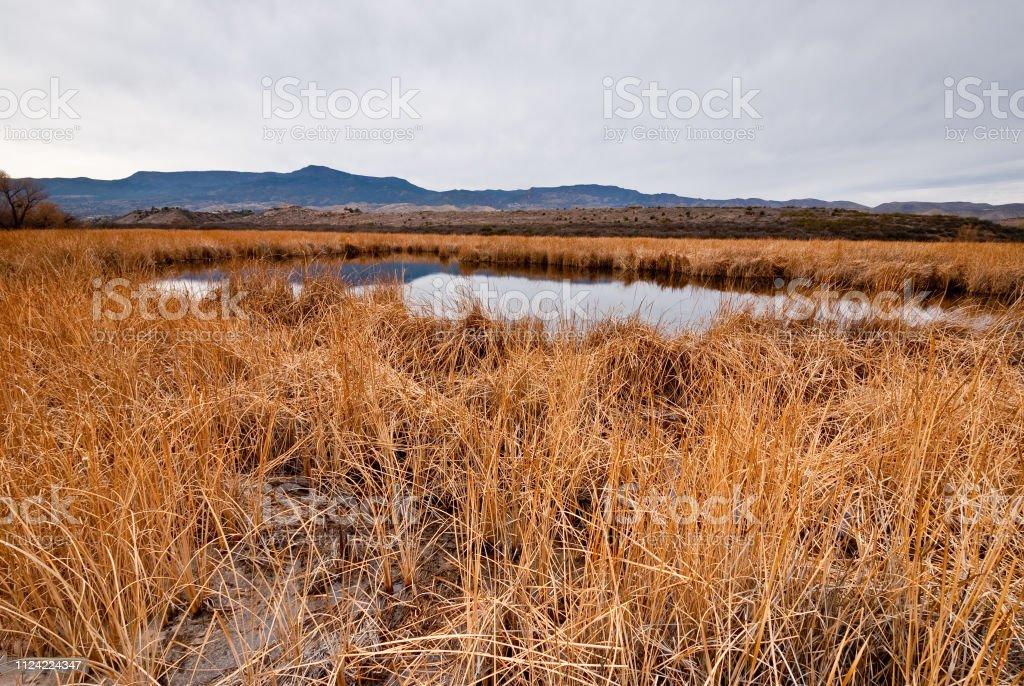 Tavasci Marsh stock photo