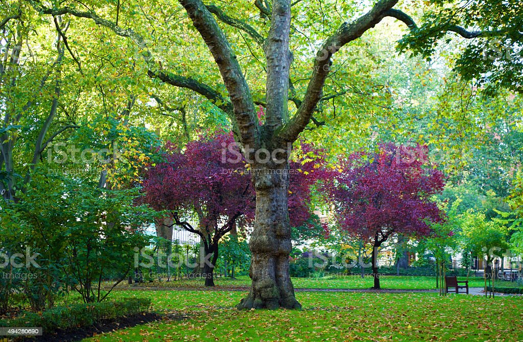 Tavistock Square London in Autumn stock photo