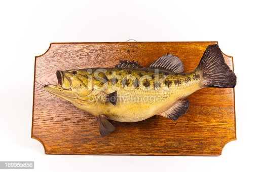 Taxidermied Fish Plaque Isolated on White