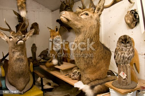 Taxidermists workshop displaying deer, fox and birds