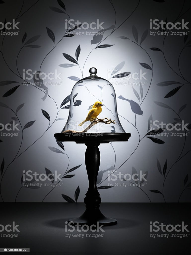 Taxidermy canary under glass dome. royalty-free stock photo
