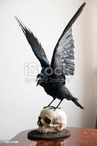 Taxidermy carrion Crow mounted on a replica human skull