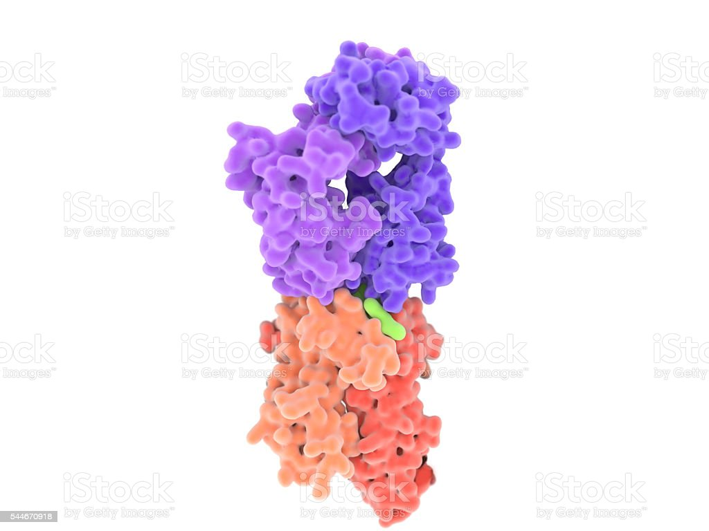 T-cell receptor complex with MHC class II-antigen. stock photo
