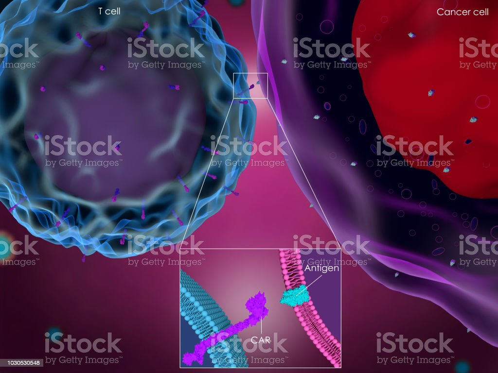 CAR T-cell therapy stock photo