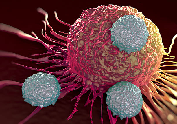 T-cells attacking cancer cell  illustration of  microscopic photos stock photo