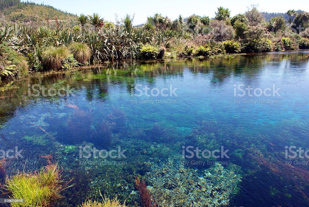 Te Waikoropupu Springs, Takaka, Golden Bay, New Zealand stock photo