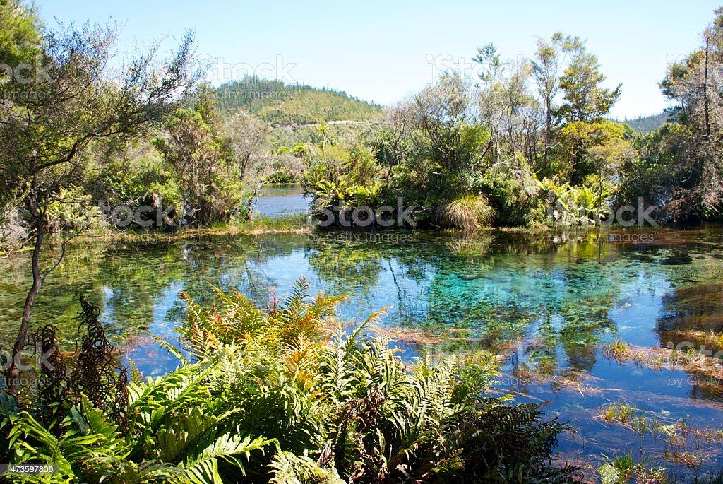 Te Waikoropupu Springs, Takaka, New Zealand stock photo