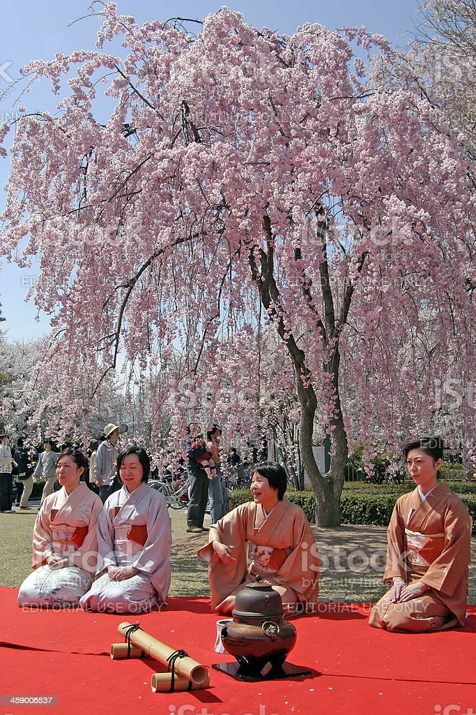 Tea ceremony at cherry blossom royalty-free stock photo