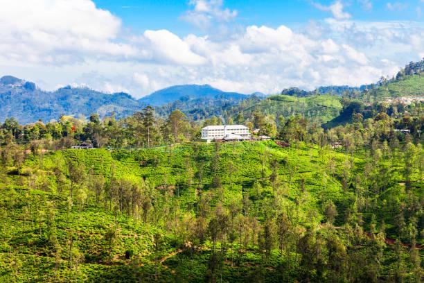 Tea factory, Sri Lanka. stock photo