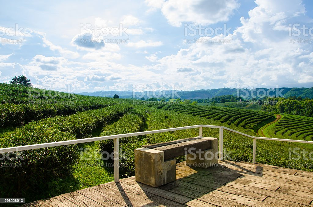 Tea Farm with Blue Sky foto royalty-free