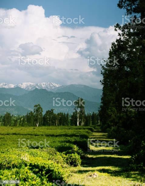 Te Fält I Foten Panoramautsikt-foton och fler bilder på Berg