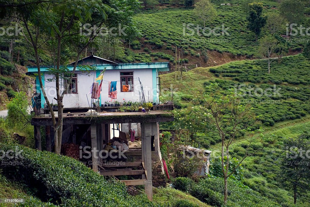 Tea Garden, West Bengal, India stock photo