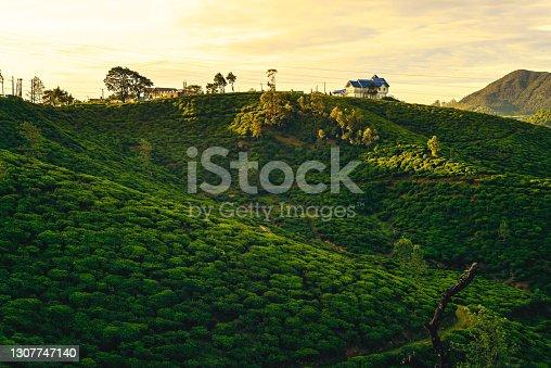 istock tea garden with farmhouse 1307747140