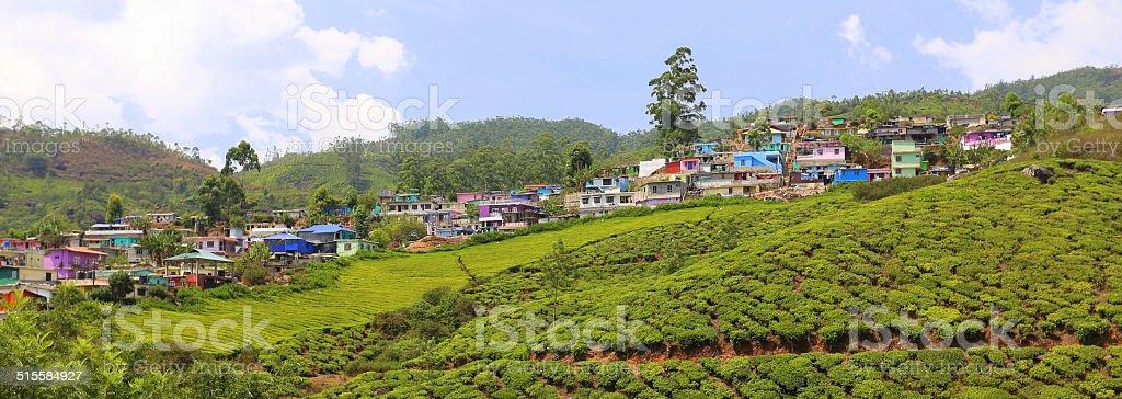 Tea Gardens in Munnar stock photo