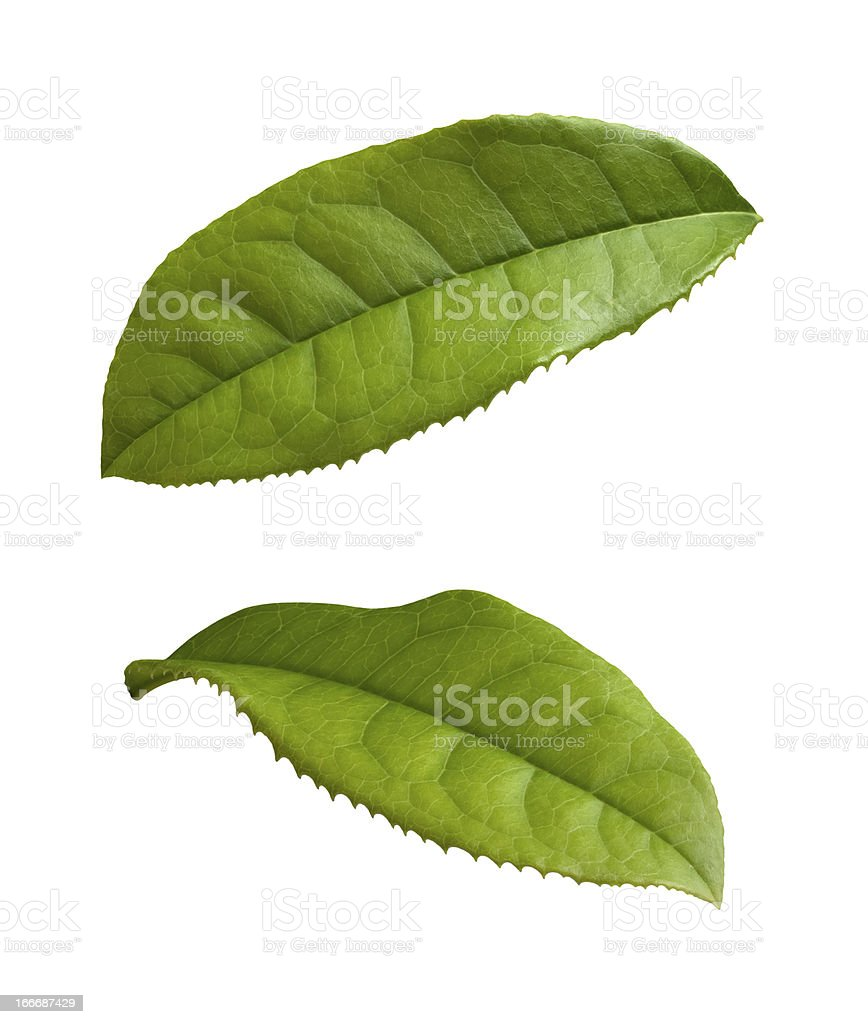 Tea Leaves isolated on a white background stock photo