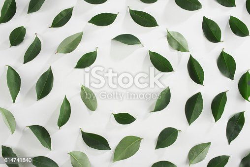 looking down to Tea leaves on white background