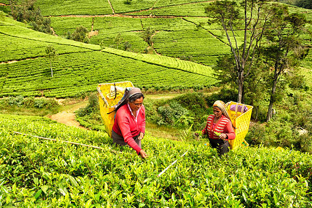 People Sri Lanka Indian Culture Indian Ethnicity Stock
